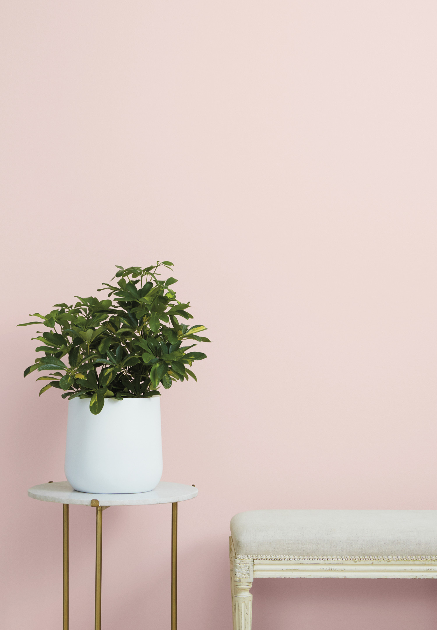 Clare Paint - Baby Soft - Wall Swatch