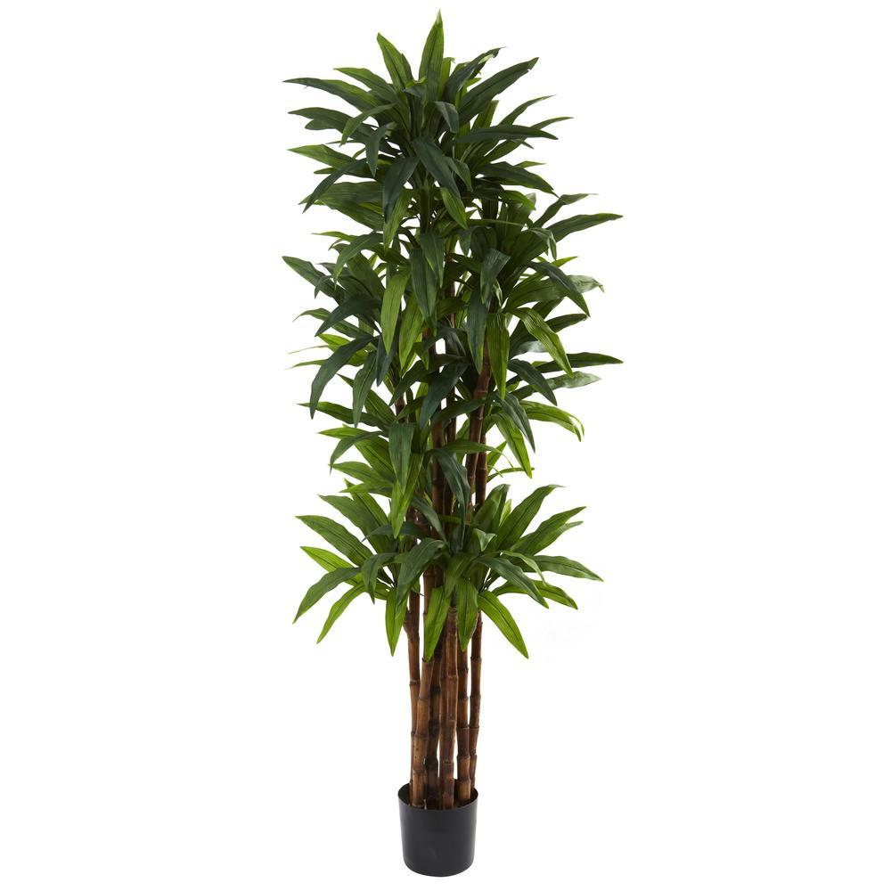 6.5' Dracaena Tree