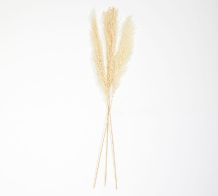 Pampas Grass Branch, Natural - Set of 3