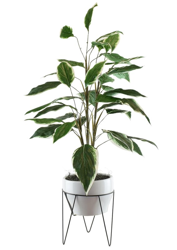 Dieffenbachia in a Mid Century Plant Stand
