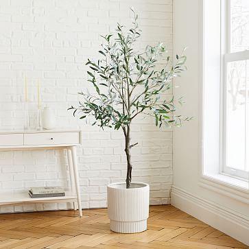 Olive Tree + Large White Fluted Planter Bundle