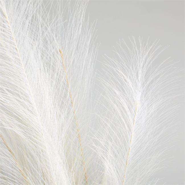 Pampas Grass Bunch