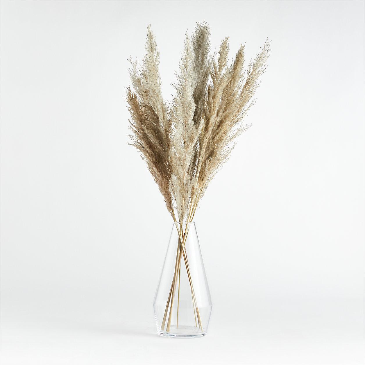 Dried Grass Plume