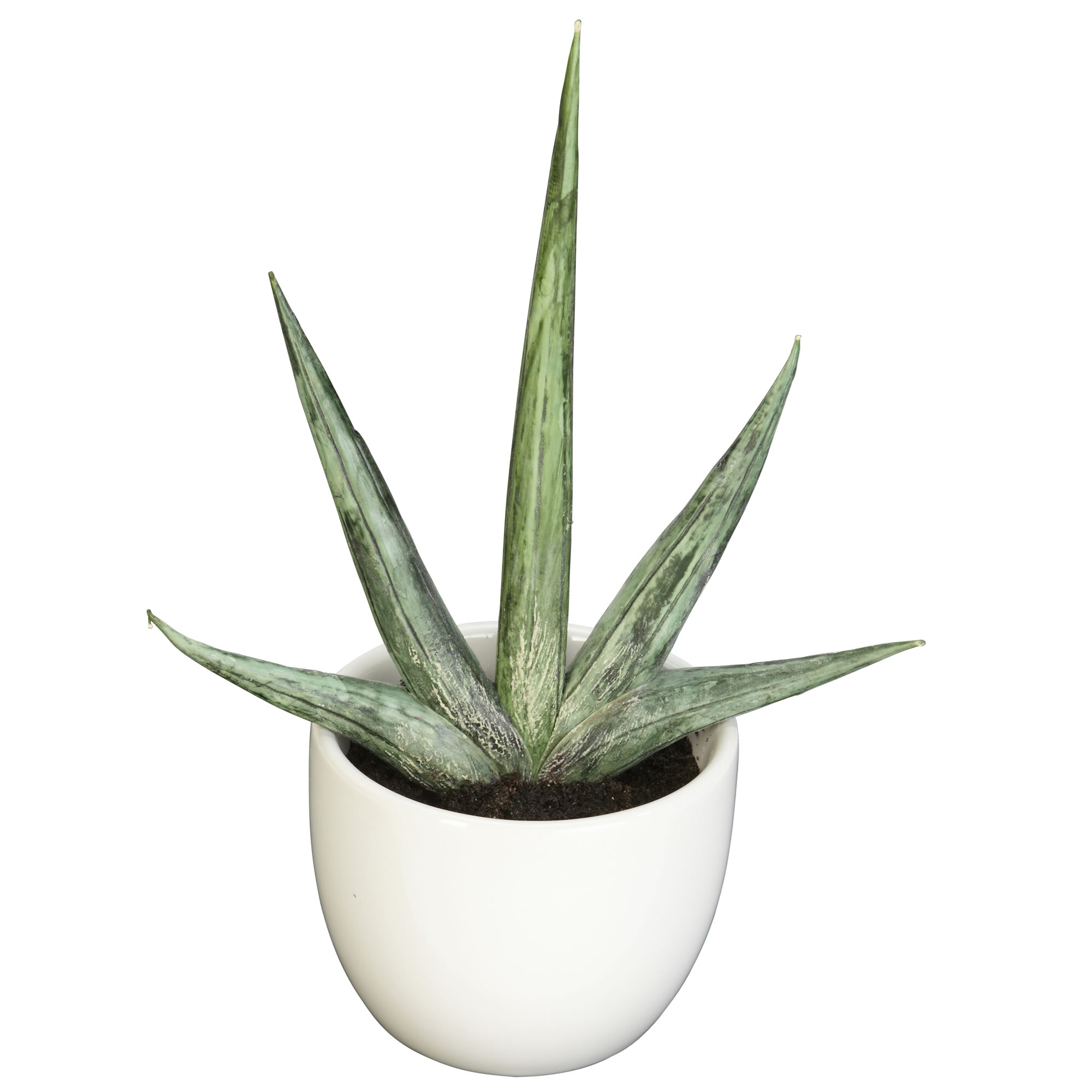 Faux Potted Succulent Collection, Set of 3