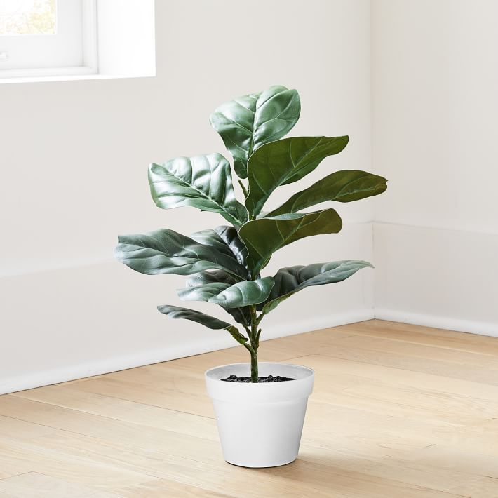 Faux Potted Fig Leaf, 2'
