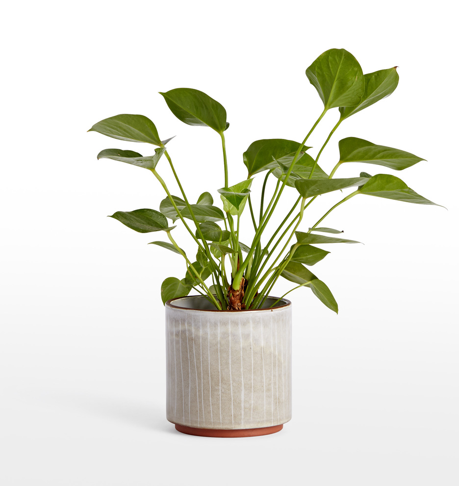 Whitney Medium Planter
