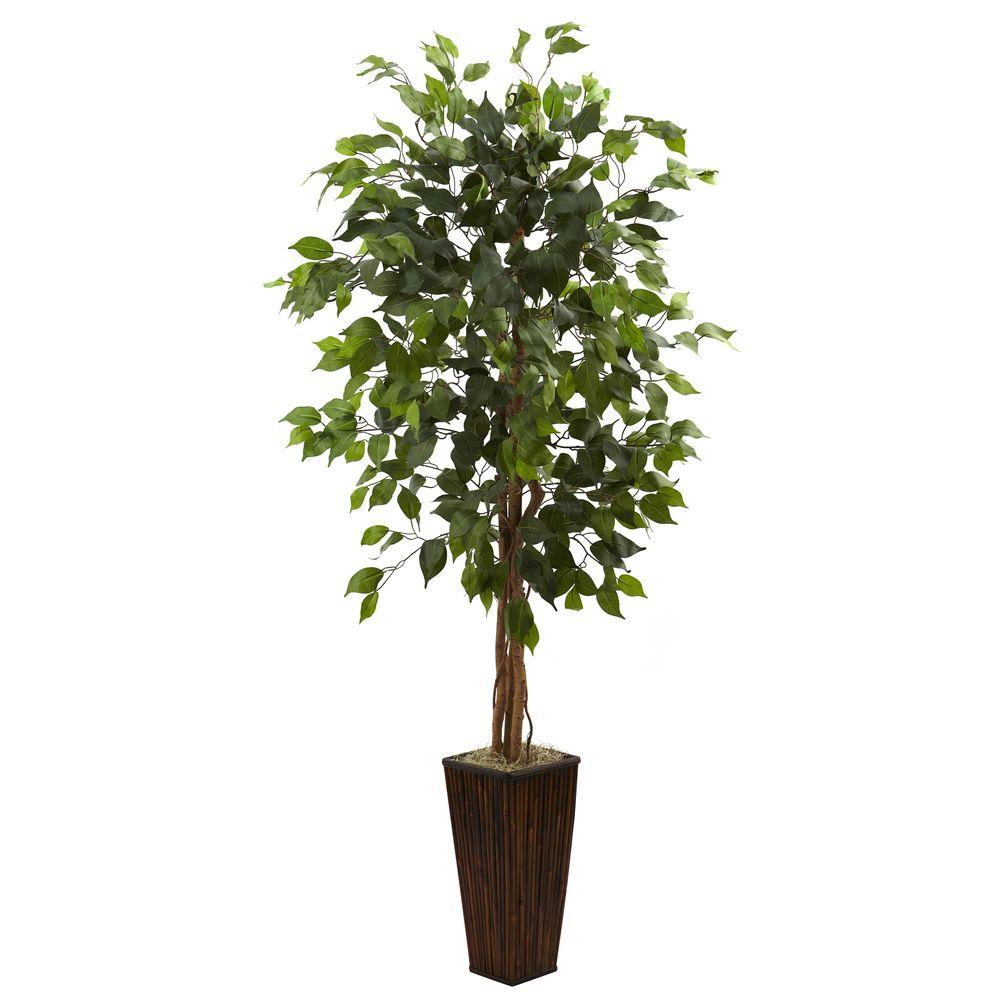 5.5 ft. Ficus Tree with Bamboo Planter