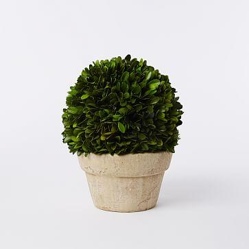 Boxwood Tree, Ball + Pot, Small