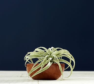 Faux Tillandsia Succulent Stem
