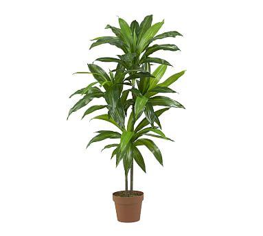 Faux Potted Dracaena Plant