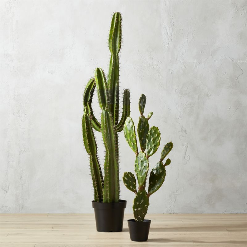 """""""potted 60"""""""" cardón cactus"""""""