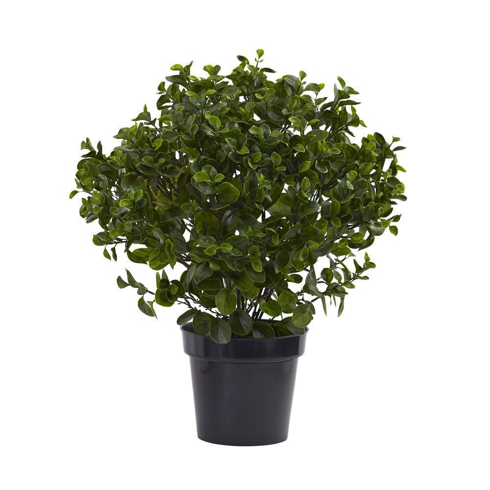 28 in. UV Resistant Indoor/Outdoor Peperomia Plant