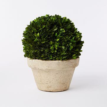 Boxwood Tree, Ball + Pot, Medium