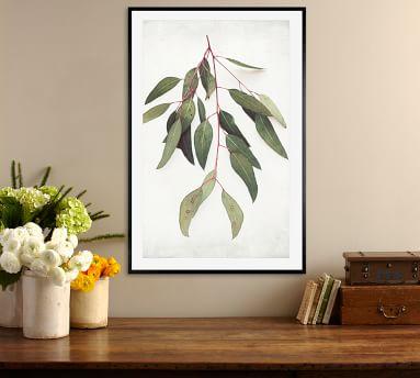 """Eucalyptus Sprig Framed Print by Lupen Grainne, 20x16"""", Wood Gallery Frame, Black, No Mat"""