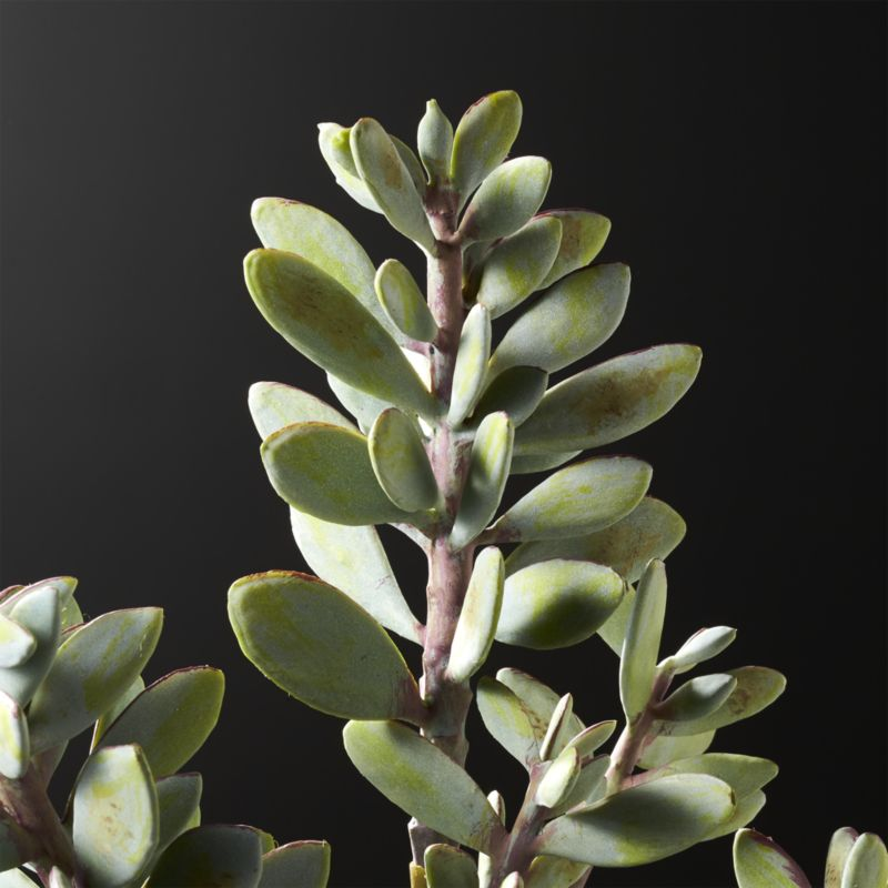 Faux Succulent Stem RESTOCK IN EARLY MAY,2021.
