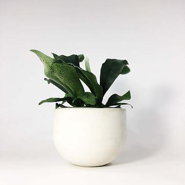 "SETTLEWELL Concrete Bowl Planter, 6"", Light Gray 2-Tone"