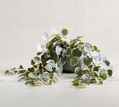 Faux Trailing Variegated String Of Hearts Houseplant
