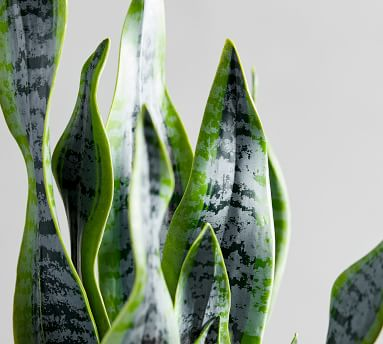 Faux Potted Houseplant, Snake Plant
