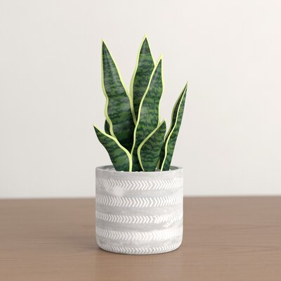 """6.5"""" Artificial Snake Plant in Pot"""