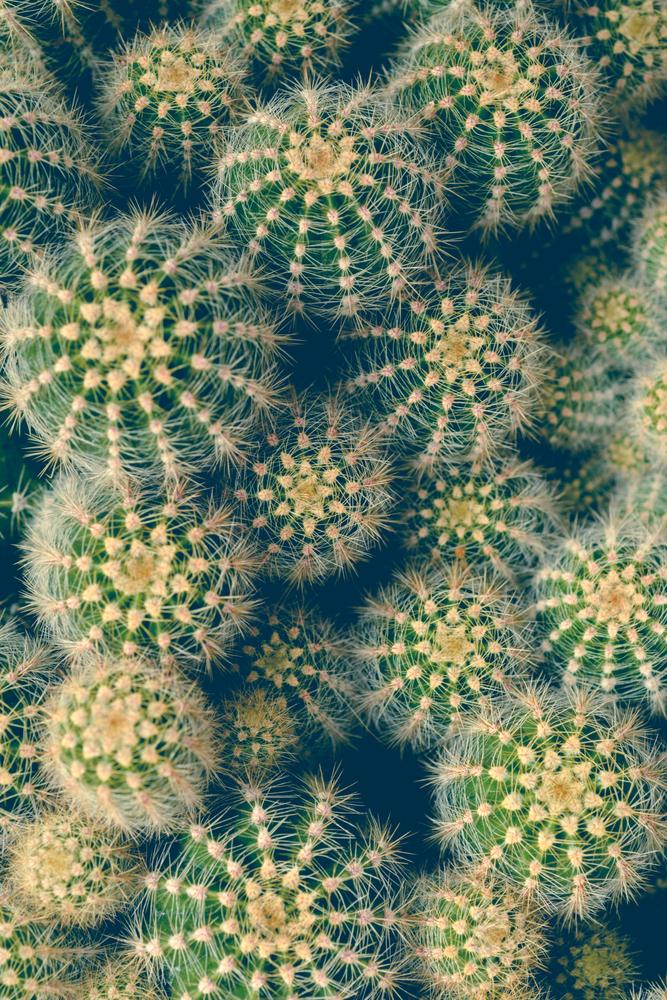 Cactus Framed Art Print by Olivia Joy St.claire - Cozy Home Decor, - Vector Black - X-Small-10x12