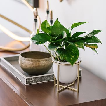 Eden Cross Base Tabletop Planter, White/Brass, Medium