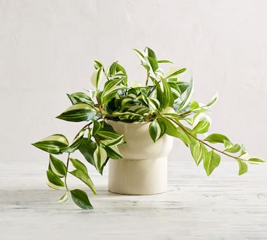 Faux Wandering Variegated Tradescantia Houseplant, Trailing