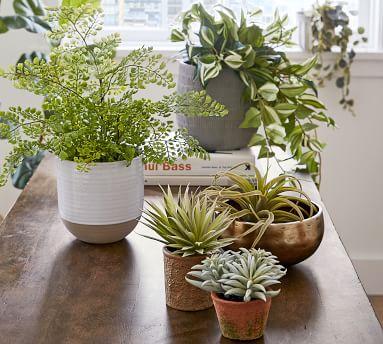 """Faux Potted Mini Echeveria Plant, 5""""H"""