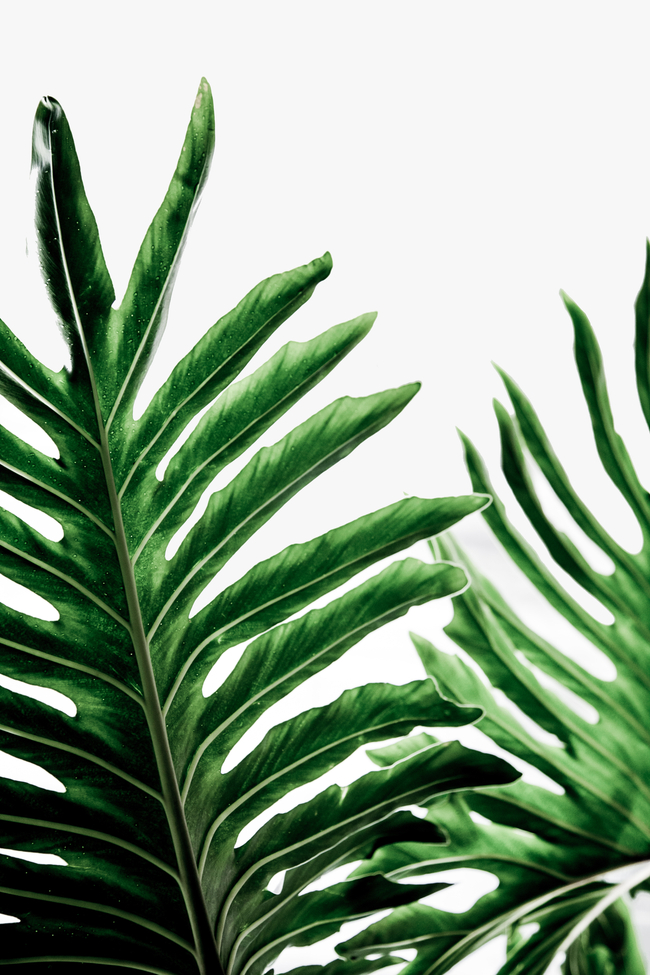 Leaves 1 Framed Art Print by Mareike BaPhmer - Vector White - MEDIUM (Gallery)-20x26