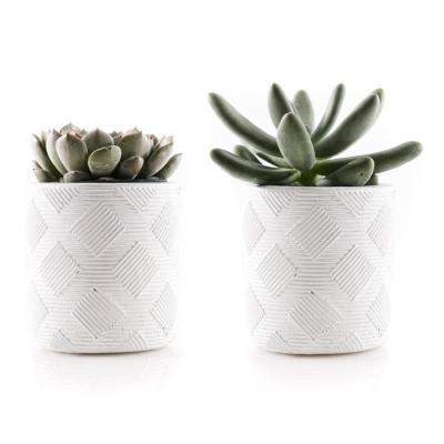 KAWAHARA NURSERY 2.5 in. Assorted Succulent Set in White Weave Pot (2-Pack)