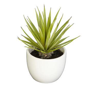 Southwest Succulent Collection