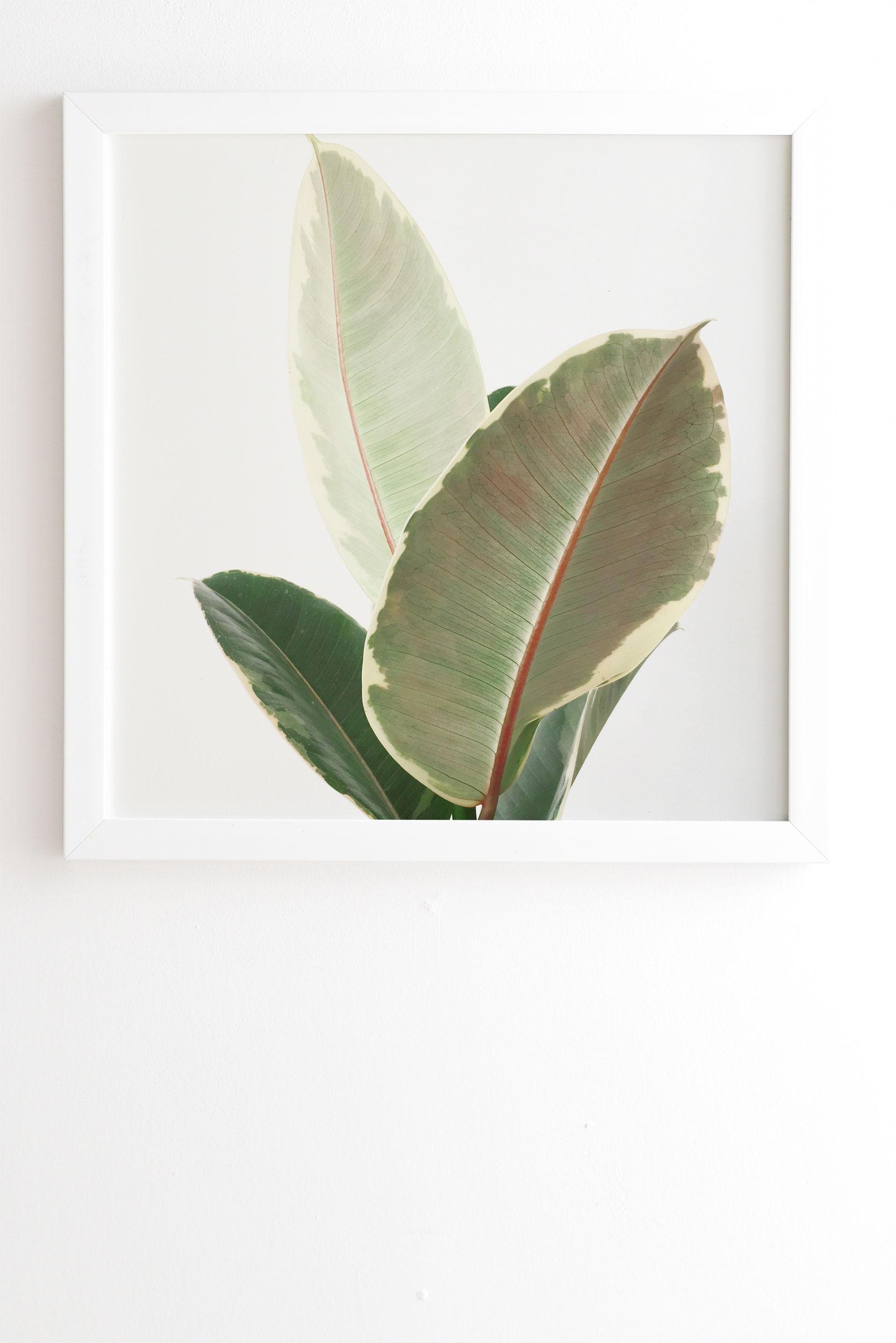 "Ficus Tineke by Cassia Beck - Framed Wall Art Basic White 11"" x 13"""