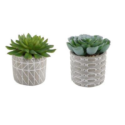 FLORA BUNDA 4 in. Set of 2 Succulent in Pattern Cement Pot