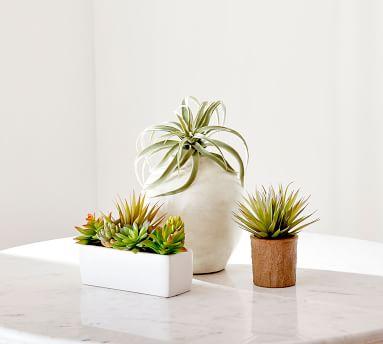 Faux Potted Succulents Set, Multi