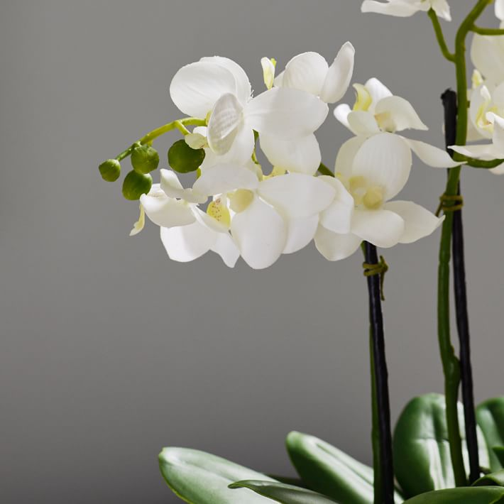 Faux Potted Orchid Arrangement