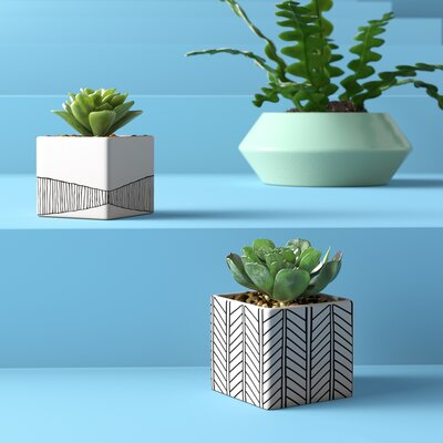 2 Piece Artificial Succulent Desktop Plant In Pot Set Wayfair