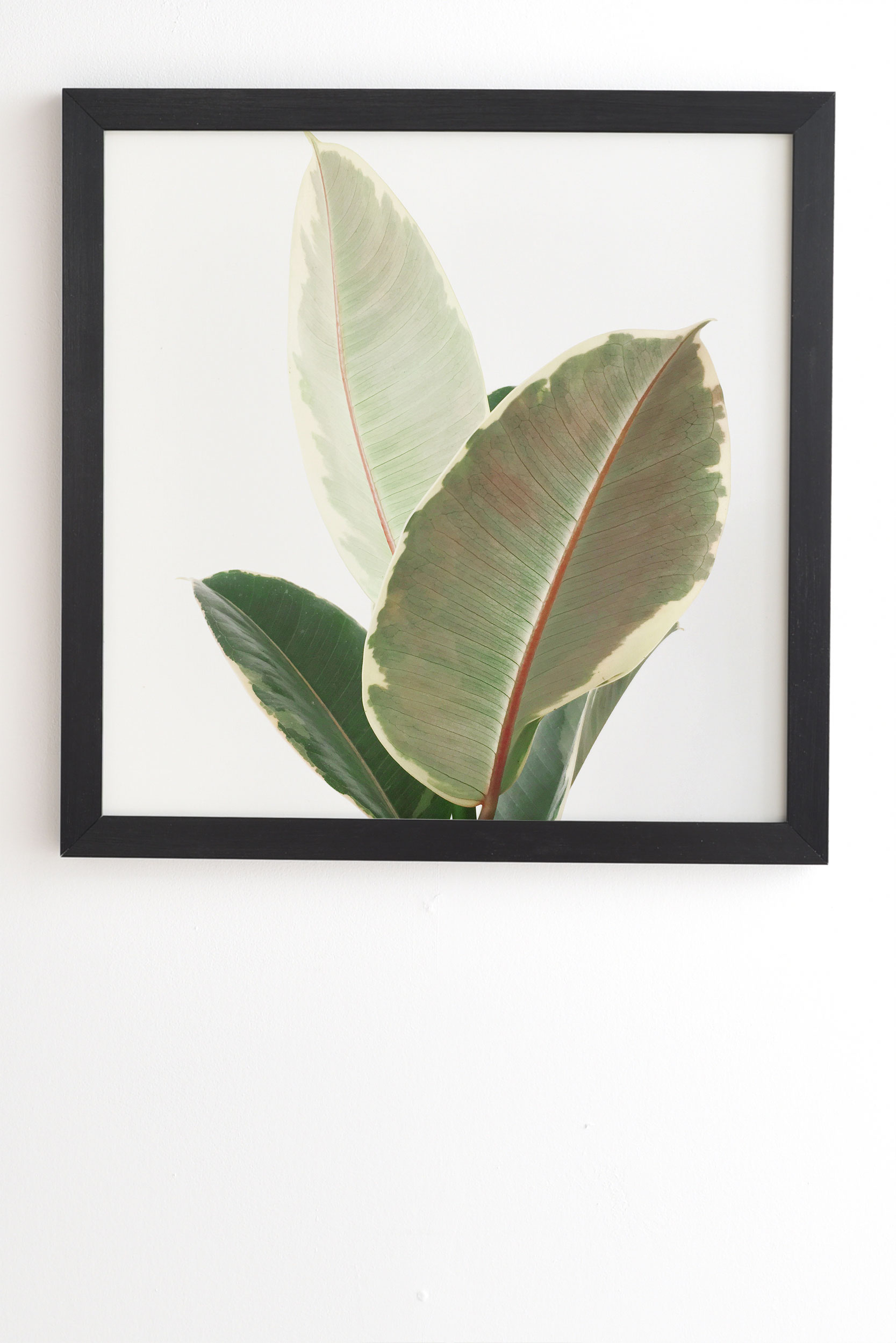 "Ficus Tineke by Cassia Beck - Framed Wall Art Basic Black 11"" x 13"""