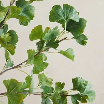 "Faux Gingko Branch, Green, 48"""