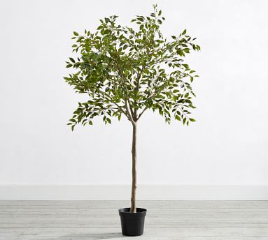 """Faux Potted Triangular Ficus, 55""""H"""