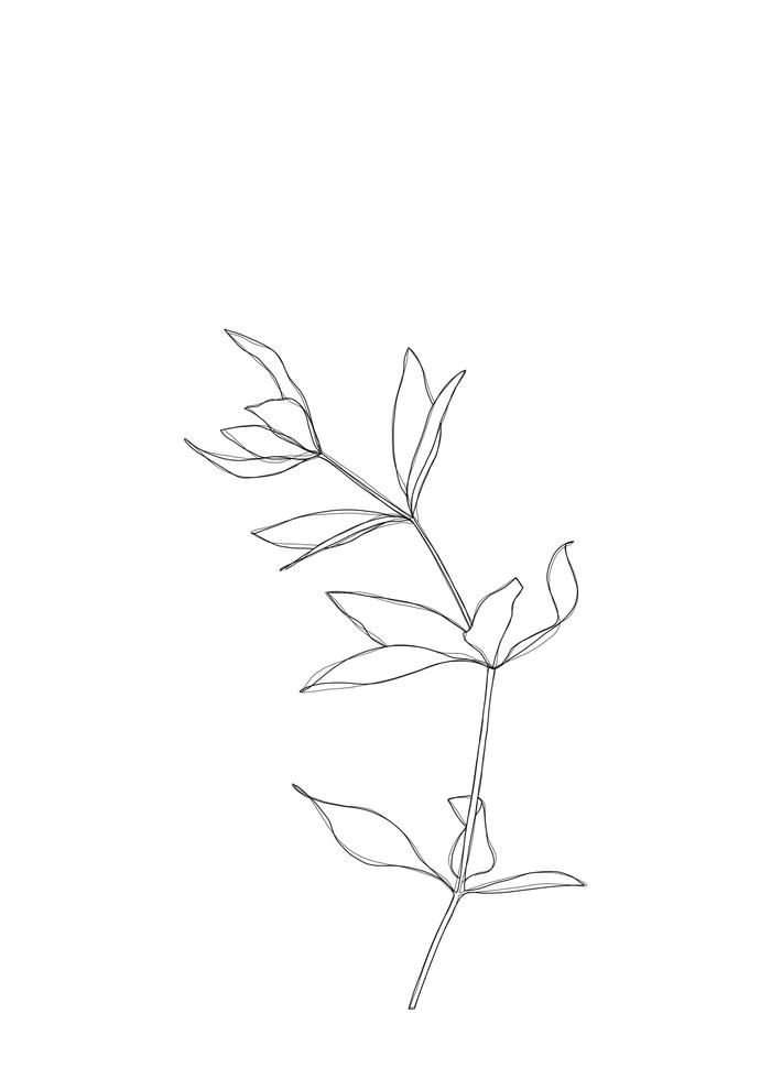 Plant Illustration Line Drawing - Primrose Framed Art Print by The Colour Study - Vector Black - MEDIUM (Gallery)-22x22