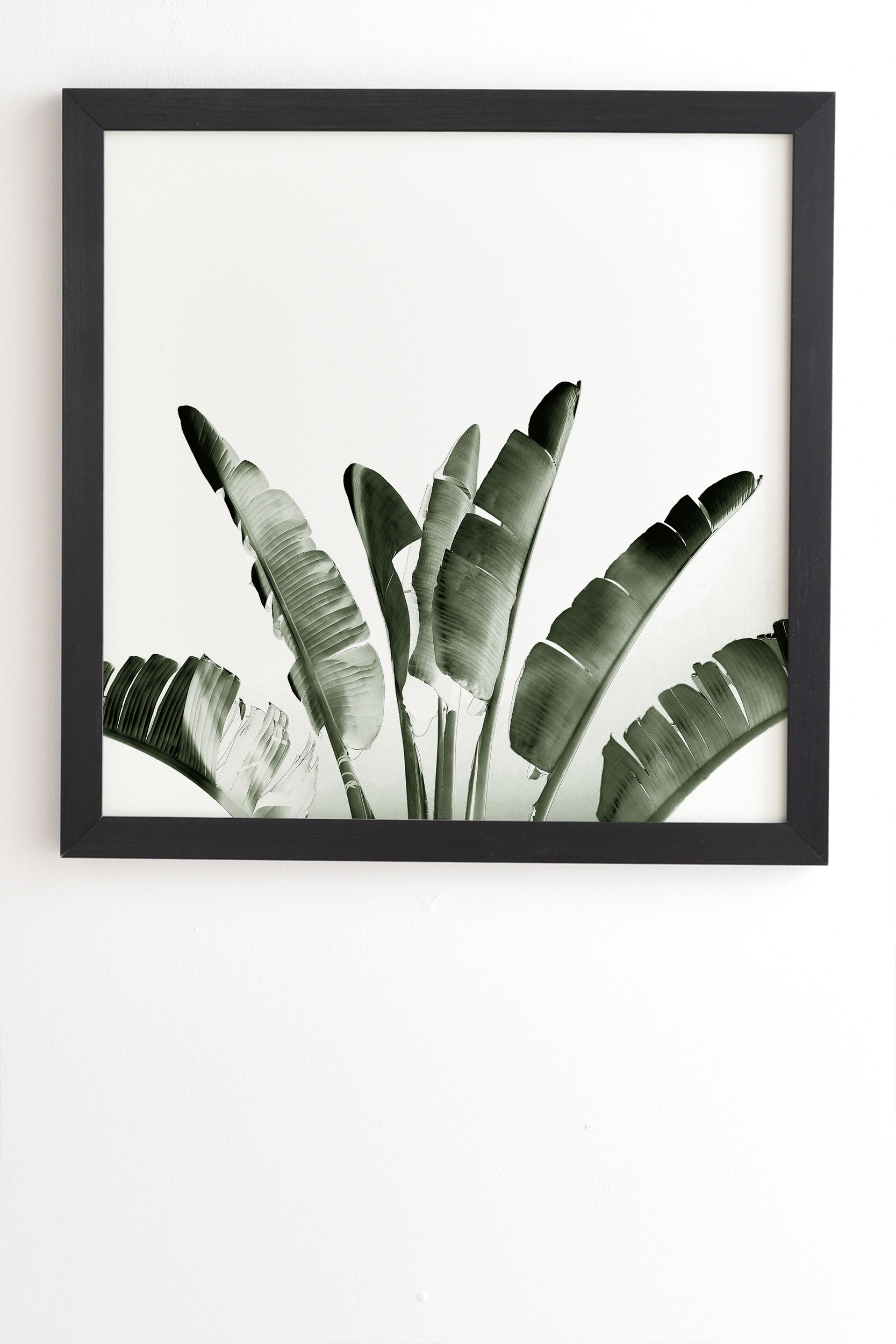"Traveler Palm by Gale Switzer - Framed Wall Art Basic Black 20"" x 20"""